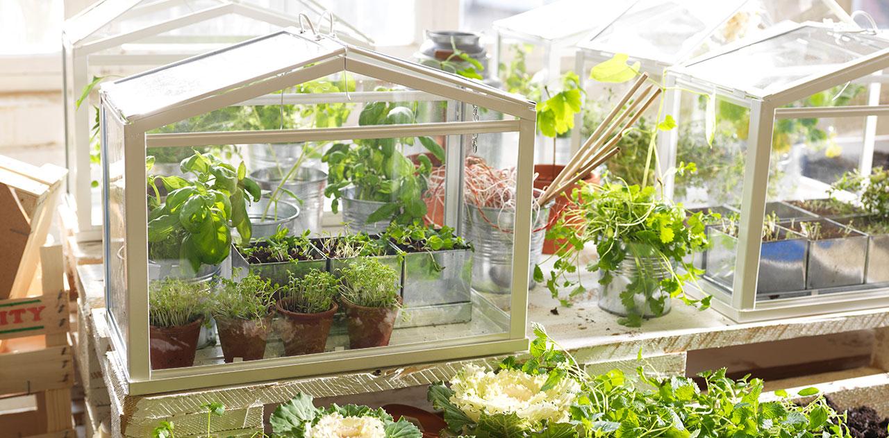 5 beneficios de poner un huerto urbano en la oficina - Huerto en la terraza ...